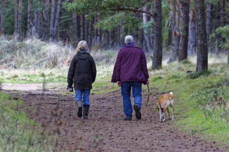 vacanze con il cane in agriturismo